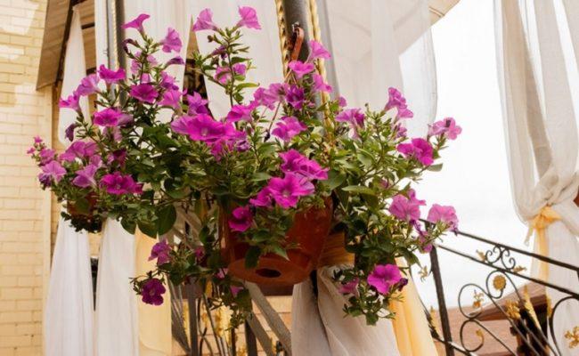Цветы в Комплексе